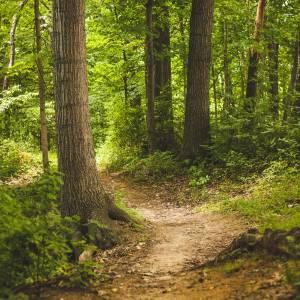 Wandel eens wat verder!<br />Mooie wandelroutes in Brabant