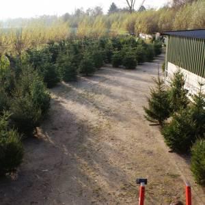 Eindhovens beste kerstbomen