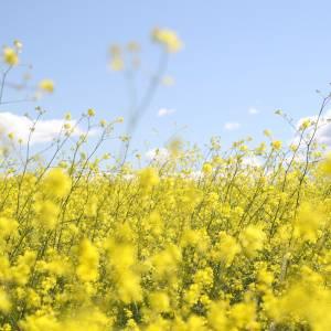 Feit of fabel: kun je over hooikoorts heen groeien?