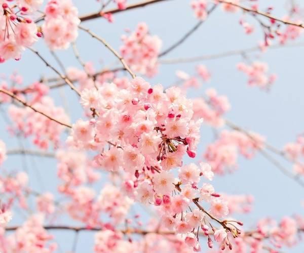Verschijnt jouw mooiste lente foto op onze cover?